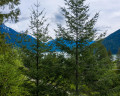 Lot 172-6500 In-Shuck-ch Forest Road image 1